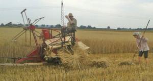 Ernteeinsatz und Platzregen